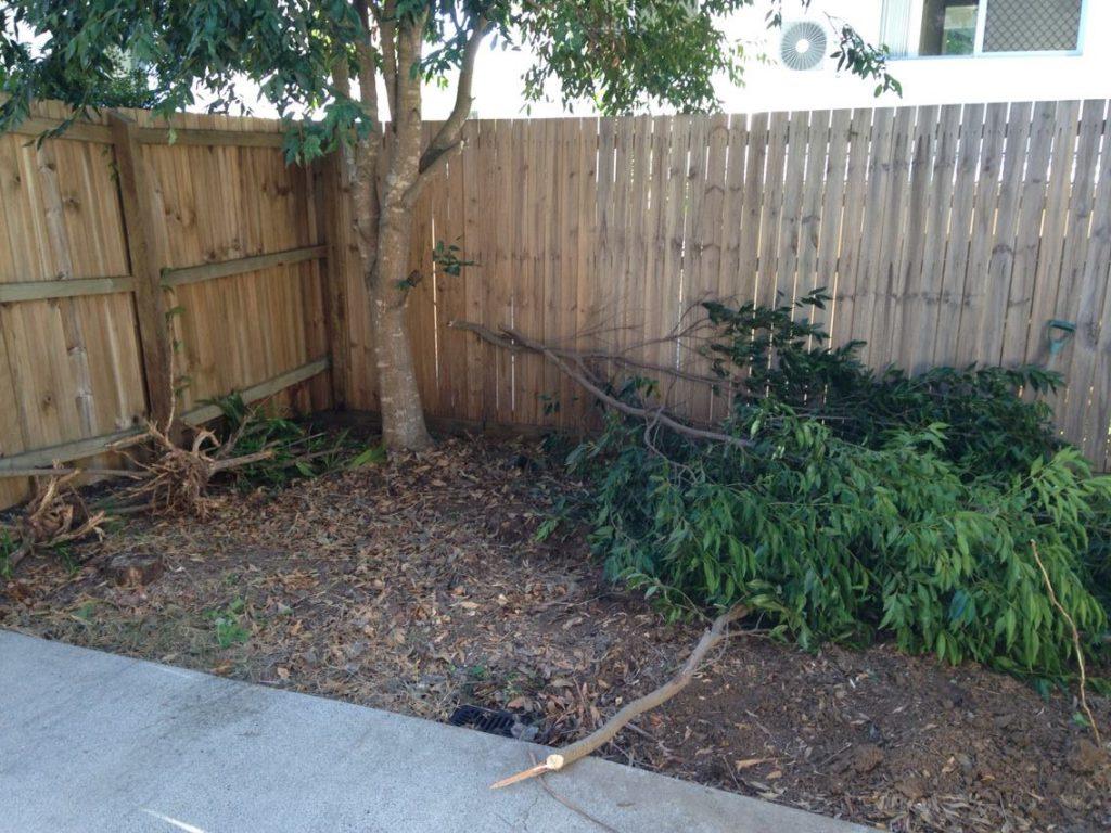 Clearing Yard 2