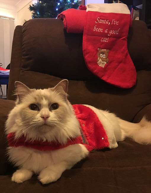 Cleo the Christmas Cat 1